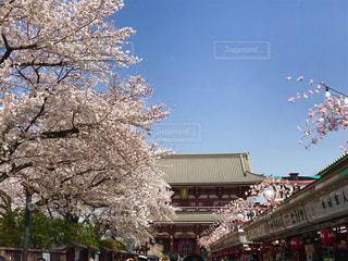 桜,東京,青空,浅草,浅草寺,隅田川,仲見世通り