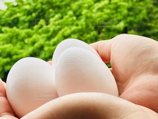 卵を持っている手の写真・画像素材[1190075]