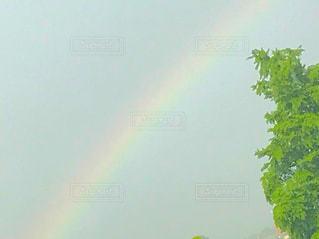 空,木,雨,緑,カラフル,虹,レインボー,樹木,雨上がり,グリーン,梅雨,フォトジェニック,インスタ映え,梅雨晴れ,多色