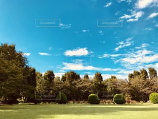 空,公園,紅葉,芝生,雲,秋空,フォトジェニック,インスタ映え