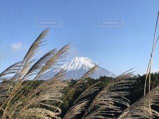 背景の山と木の写真・画像素材[1640014]