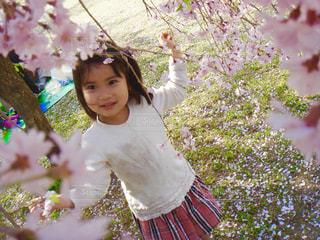 春,ピンク,チェック,しだれ桜,女の子,お花見,ホワイト,桃色,河津桜,枝垂れ桜,セミロング,早咲き