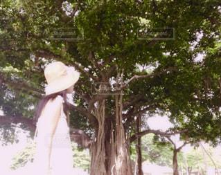 女性,自然,海外,緑,ワンピース,後ろ姿,リボン,麦わら帽子,外国,パワースポット,ハワイ,お散歩,ホワイト,エネルギー