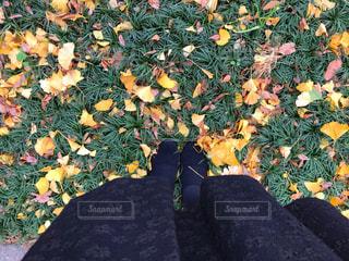 草の上に横たわっている黒い犬の写真・画像素材[2703587]