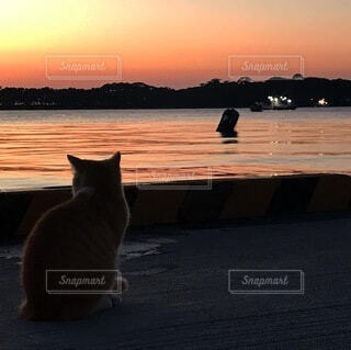 猫,空,動物,屋外,太陽,朝日,オレンジ,座る,正月,お正月,日の出,新年,初日の出,ネコ
