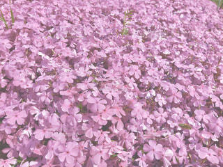 緑の葉のピンクの花の写真・画像素材[4258372]