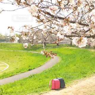 公園の人々のグループの写真・画像素材[4282510]