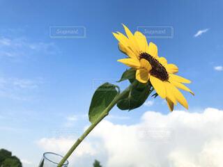 花のクローズアップの写真・画像素材[4318391]