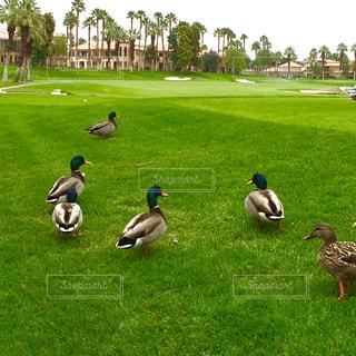 リゾート,スポーツ ゴルフ パームデザート カリフォルニア
