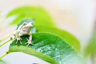 緑の写真・画像素材[535386]
