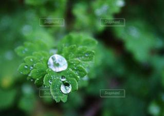 雨の写真・画像素材[548756]