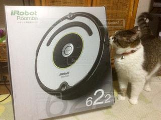 猫 - No.529078