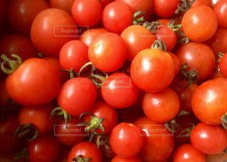 トマトの写真・画像素材[531392]