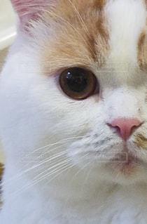 猫,インテリア,目,ネコ