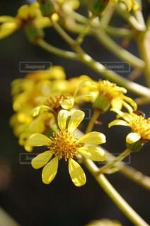 花の写真・画像素材[605395]