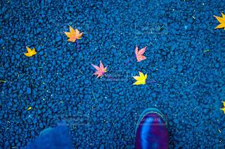 秋の足元の写真・画像素材[1036242]