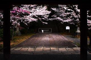 春,桜,京都,観光,豊臣秀吉,豊国廟
