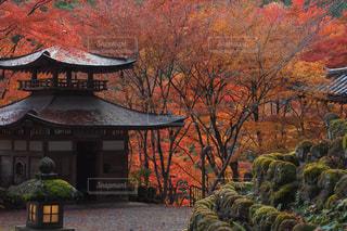 秋,紅葉,京都,観光,寺,仏教,愛宕念仏寺,千二百羅漢