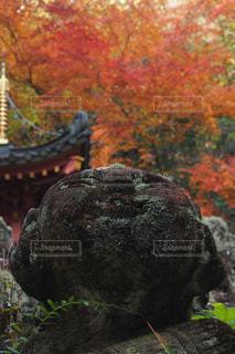 秋,紅葉,京都,観光,寺,仏教,愛宕念仏寺,羅漢像,千二百羅漢