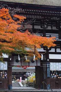 秋,紅葉,京都,神社,観光,名所,神社仏閣,松尾大社