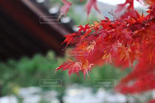 風景の写真・画像素材[528653]