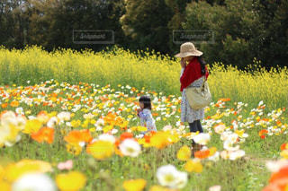 お花畑を見ている人々 のグループ - No.752421