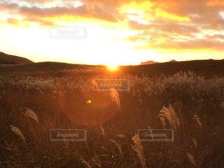 秋の写真・画像素材[529353]