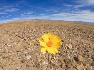 黄色の写真・画像素材[597883]