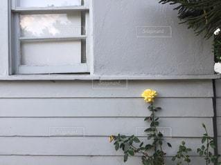 黄色の写真・画像素材[597907]