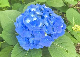 花の写真・画像素材[576872]