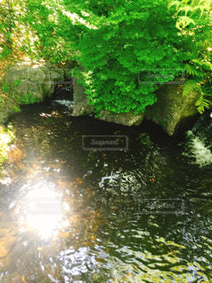 近くに池のアップ - No.914411