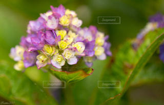 植物 - No.575213