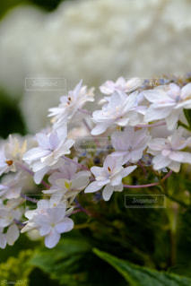 植物 - No.575216