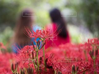 近くの花のアップ - No.757017