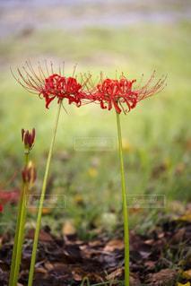 近くの花のアップ - No.757026