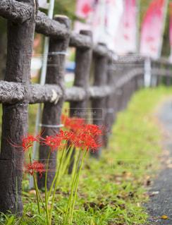 ピンクの花と草と木 - No.758359