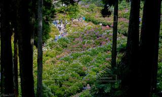 フォレスト内のツリー - No.770451
