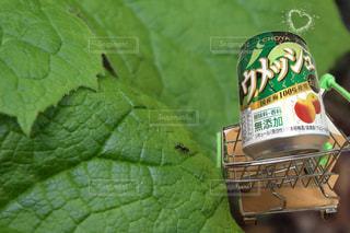 お酒 - No.552867