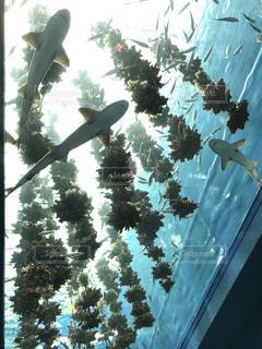 夏,かわいい,綺麗,水,癒し,サメ,summer,海の生き物,PassMe,仙台海の社水族館