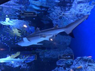 魚の写真・画像素材[676757]