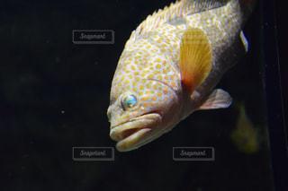 魚の写真・画像素材[676771]