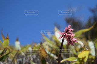 近くの花のアップの写真・画像素材[765968]