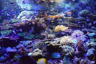 サンゴの水中ビューの写真・画像素材[985478]