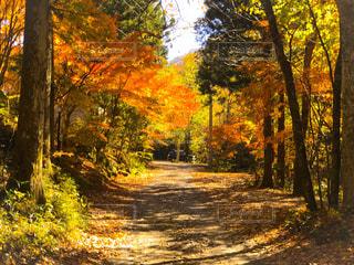 森の中の木の写真・画像素材[894727]