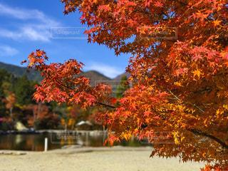 秋の写真・画像素材[894731]