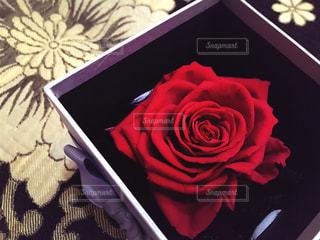 花の写真・画像素材[542744]