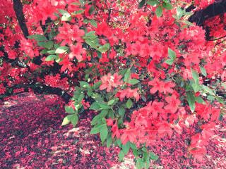 花の写真・画像素材[542734]