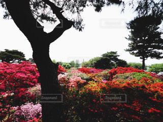 花の写真・画像素材[542777]