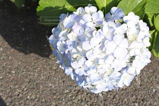 花の写真・画像素材[556159]
