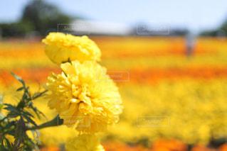 花の写真・画像素材[560937]
